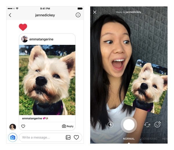 increasing instagram comments on dog photo